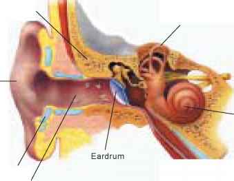 Inside Temporal Bone