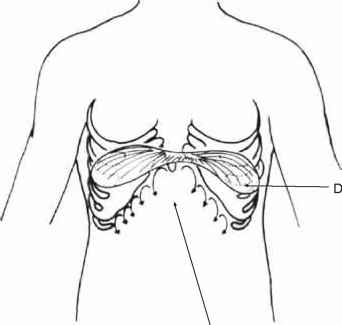 Stomach And Sternum