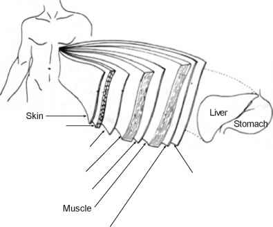 Subcutaneous Layer Fascial Layer